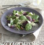 warm alfalfa sprout salad